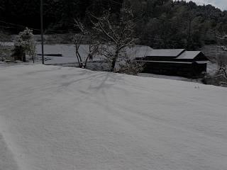 20110118yuki.jpg